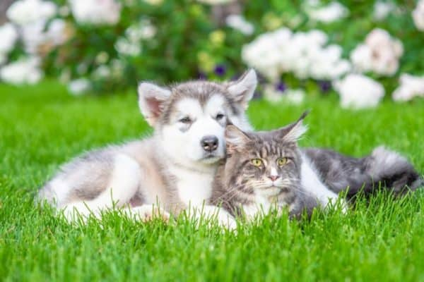 dog and cat breeding online -