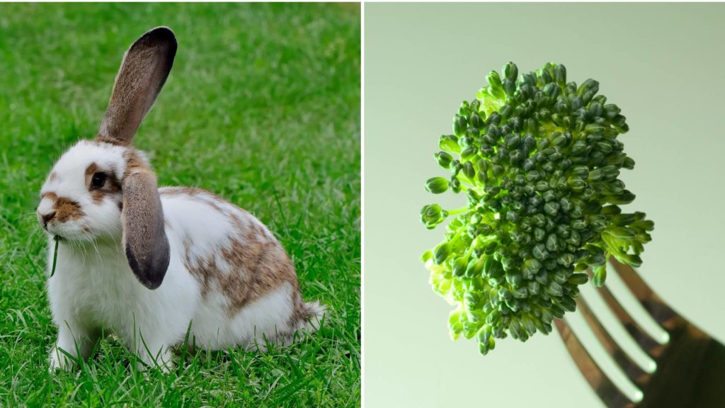 Can Rabbits Eat Broccoli? (Serving Size, Hazards, & More)