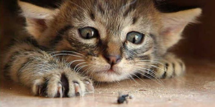 Can Cats Eat Bugs Including Insects | Pet Care Advisors