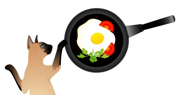 Can Cats Eat Eggs?   Shorthair Cat Breeds