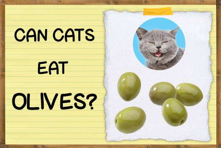 Can Cats Eat Olives?   ZooAwesome