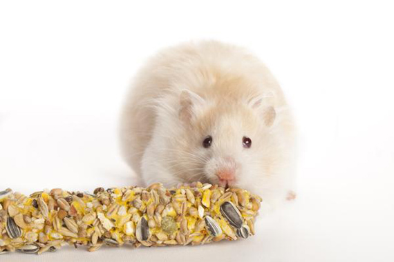 Understanding Hamsters and Guinea Pigs Dietary Needs | Pet ...