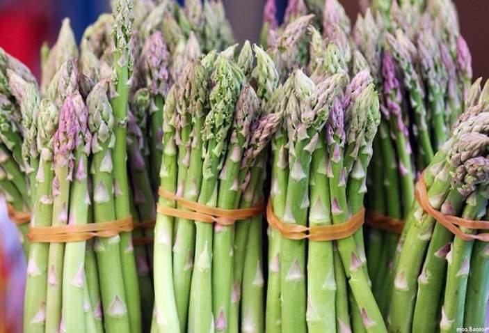 Can Rabbits Eat Asparagus Shoots? | Pet Care Advisors