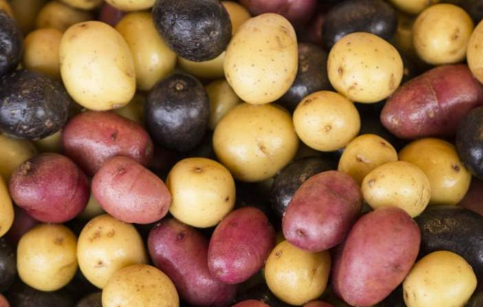 Can Rabbits Eat Potato, Potato Chips or Leaves?