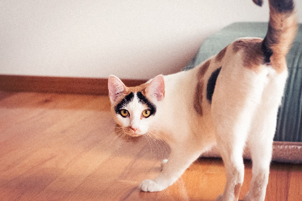 Cat Spraying — Why Does It Happen and What Can You Do? - Catster