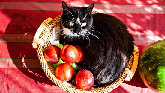 Can Cats Eat Apples? Are Apples Bad For Cats?   Balcony Garden Web