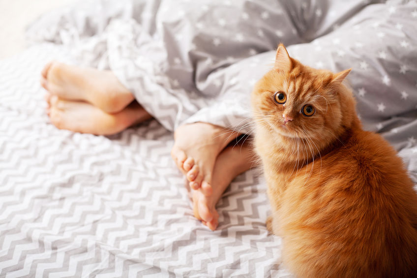 Why Do Cats Love Feet? | Two Crazy Cat Ladies