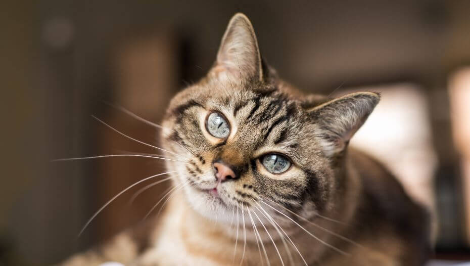 Coping with Blindness in Cats | Purina