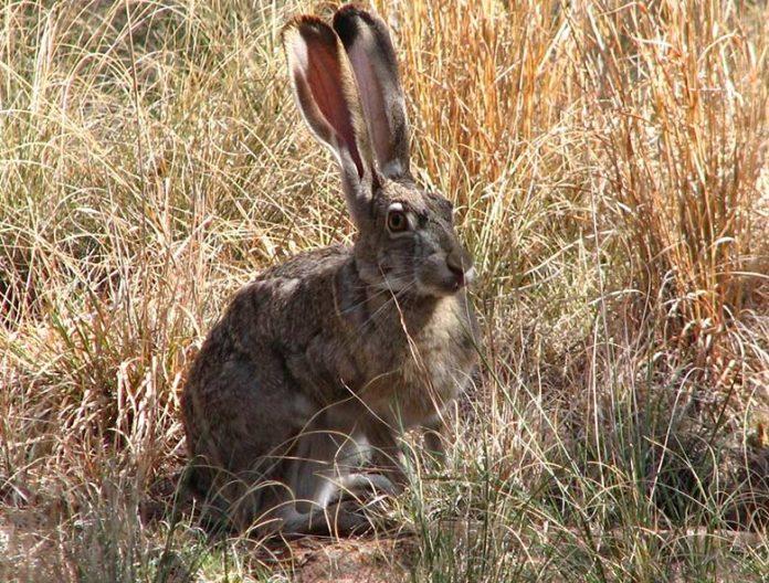 Do Wild Rabbits Eat Corn, Celery, Lettuce, Peanuts | Petsial