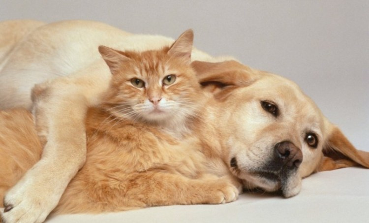 20 Dog Breeds You Don't Want Around Cats
