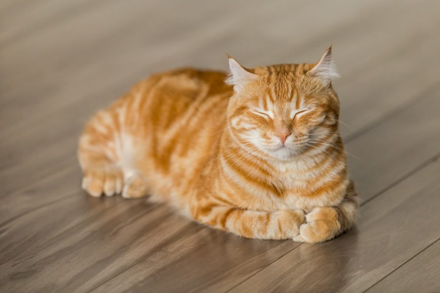 🥇 How Can I Treat My Cats Uti At Home【 2021 】Home remedies