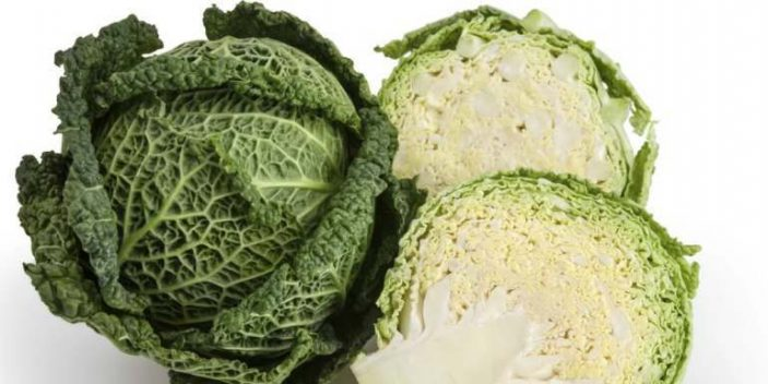 Can Cats Eat Cabbage? | Pet Care Advisors