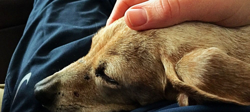 Saying Goodbye to Your Dog: How to Know When It's Time