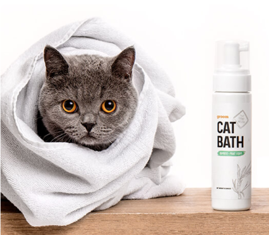 How To Give a Cat a Bath | Learn more on Litter-Robot Blog