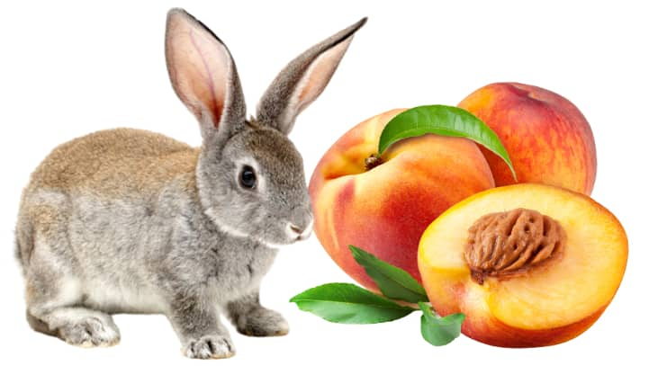 Can Rabbits Eat Peaches? (Serving Size, Benefits, Risks)