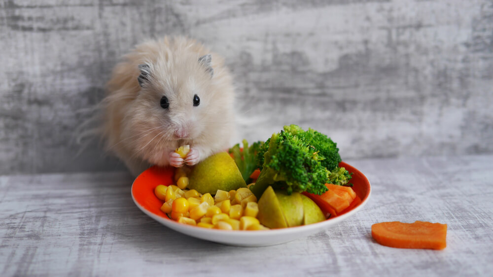 What Do Hamsters Eat? - We're All About Pets