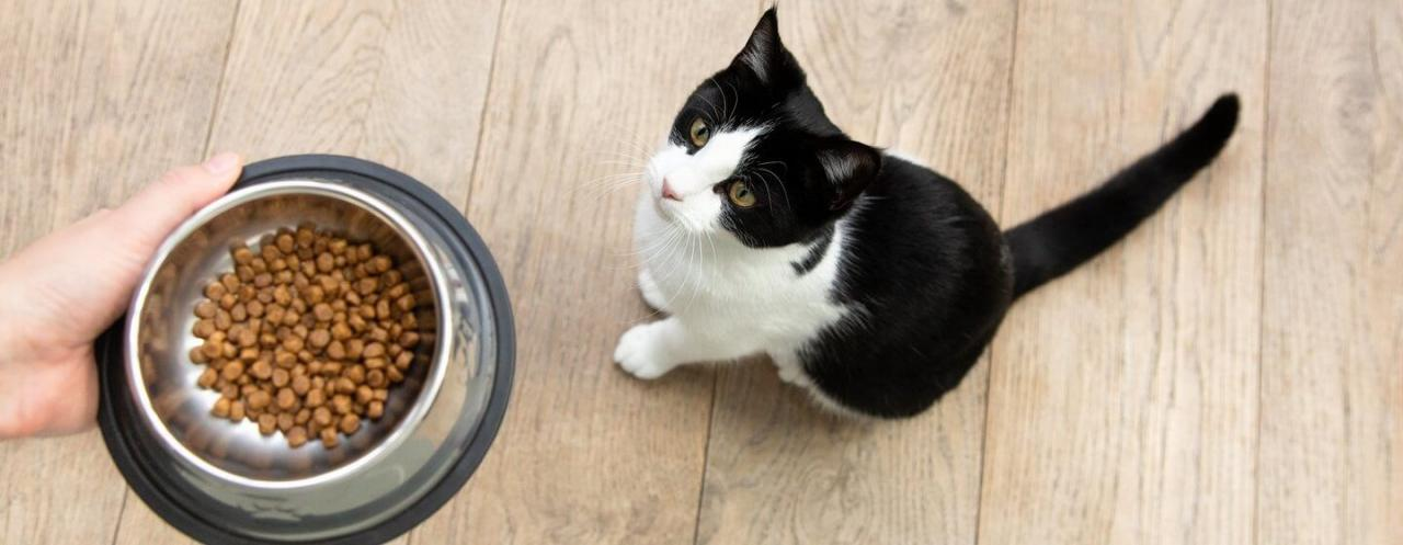 What to Feed a Kitten: Best Food for Kittens   Purina