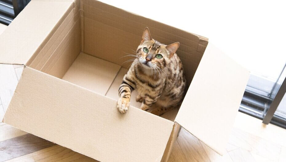 Revealed: Why Do Cats Like Boxes So Much? | Purina