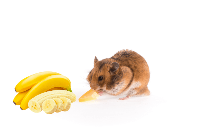 How Much Banana Can A Hamster Eat?