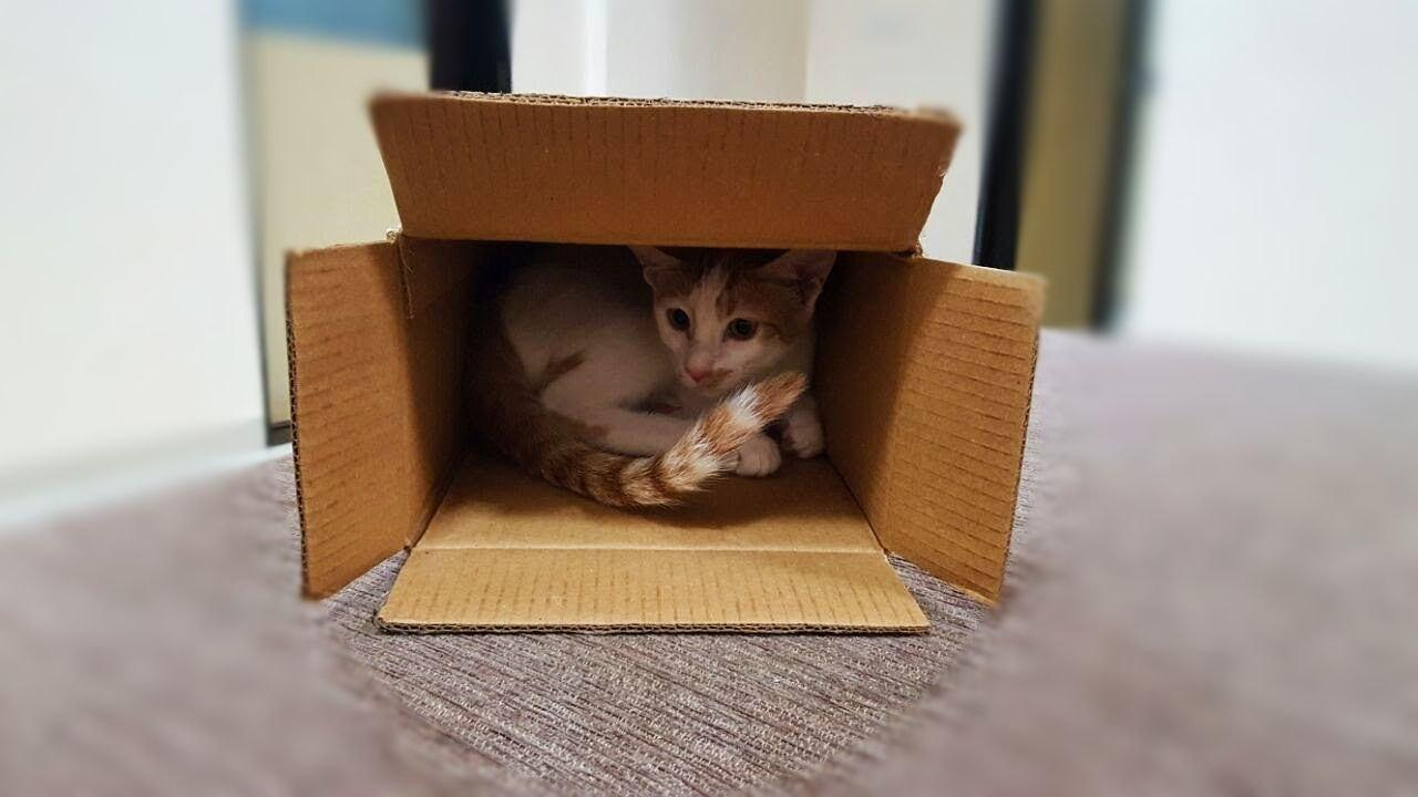 Why do cats chew on Cardboard boxes. Should you worry?