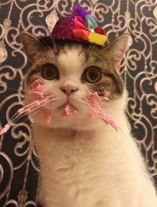 Este gato con sombrero comiendo pastel de cumpleaños es adorablemente divertido | Crazy cats, Cat birthday, Cats
