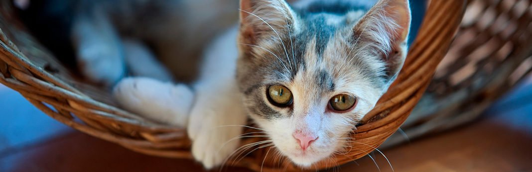 Autism In Cats: Can Kitties Be Autistic?   My Pet Needs That