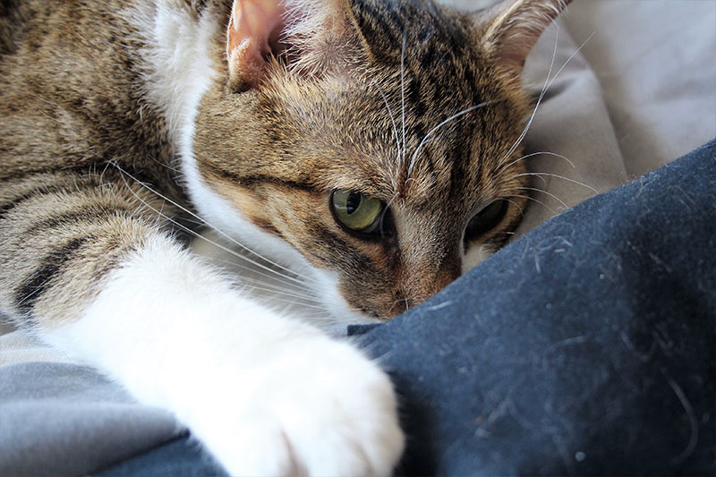 How Do You Tell If a Cat Is Blind? How Do You Care for a Blind Cat?