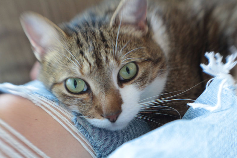 Is Vinegar Safe for Cats to Eat? Should I Clean with Vinegar or Will It Make My Cat Sick?