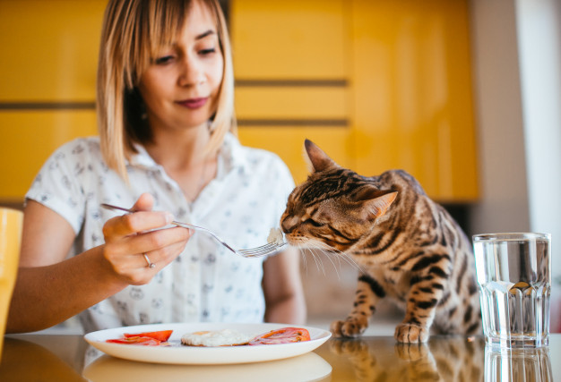 https://www.freepik.com/free-photo/bengal-cat-tastes-breakfast-from-woman-s-fork_1472608.htm#page=2&query=cat+eating&position=4