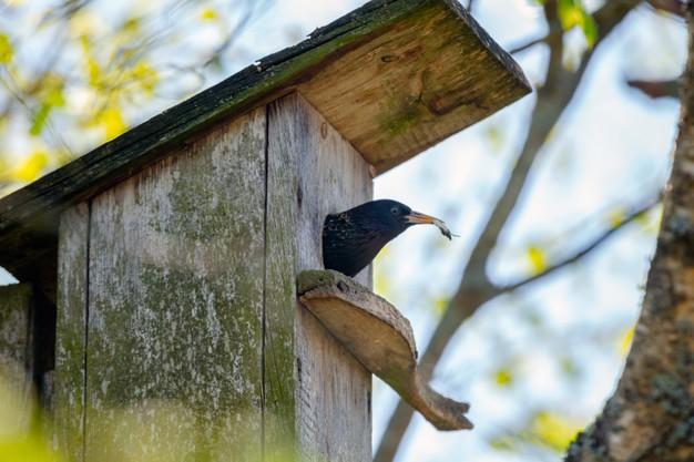 https://www.freepik.com/premium-photo/bird-feeding-kids-wooden-bird-house-hanging-birch-tree-outdoors_13307098.htm#page=1&query=worms%20bird%20food&position=23