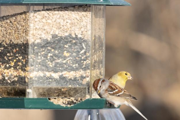 https://www.freepik.com/free-photo/birds-sitting-near-bird-feeder_12328003.htm#page=1&query=foods%20for%20bird&position=47