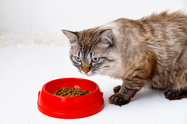 https://www.freepik.com/premium-photo/brown-tabby-cat-eating-from-red-bowl_9914464.htm#page=2&query=cat+eating&position=31