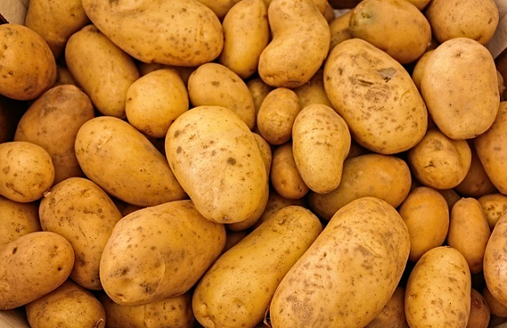 Can Guinea Pigs Eat Potatoes and Potato Skin?