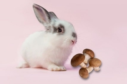 Can Rabbits Eat Mushrooms or Are They Toxic?