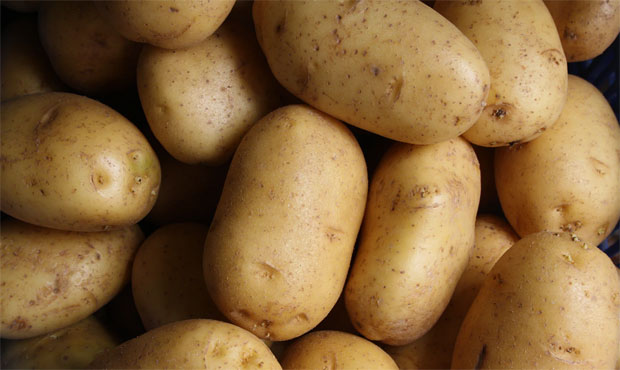 Can Rabbits Eat Potato? Raw Or Cooked?