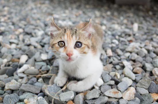 Can Cats Eat Sardines In Oil? - Neeness