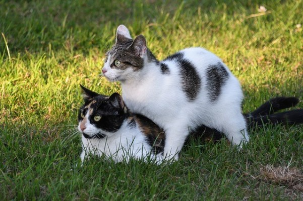 My Cats Are Having Sex! What Should I Do About It?