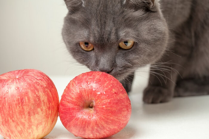 Can Cats Eat Apples? - All About Cats
