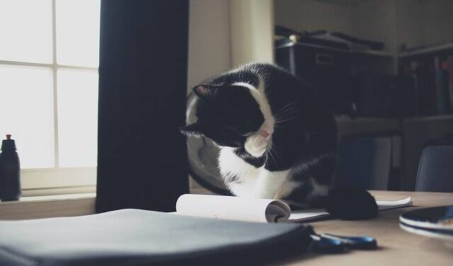Why Do Cats Lay on Paper? (Here Are 5 Reasons to Explain This ...