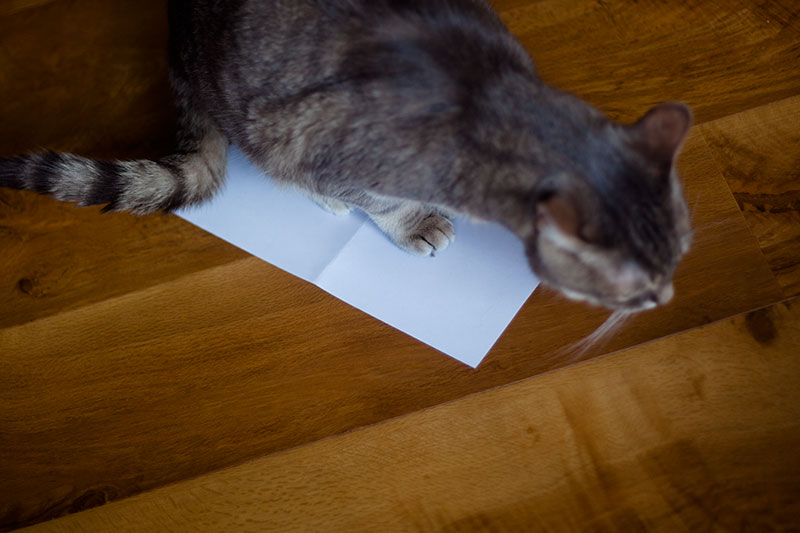 Why Do Cats Like to Sit & Lay on Paper? 8 Theories - What's Yours?