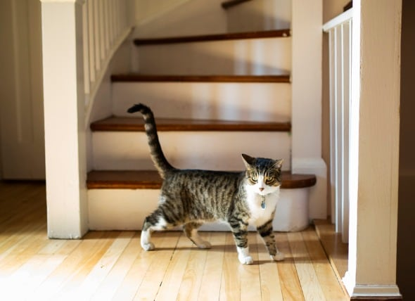 How Long Are Cats in Heat? At What Age Can Cats Get Pregnant? | PetMD