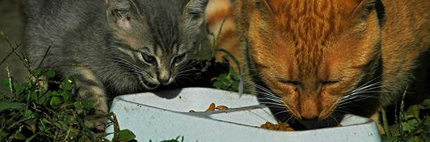 Cat Wet Vs Dry   Pet Circle