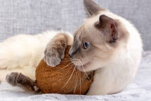 Can Cats Eat Coconut? 9 Interesting Facts