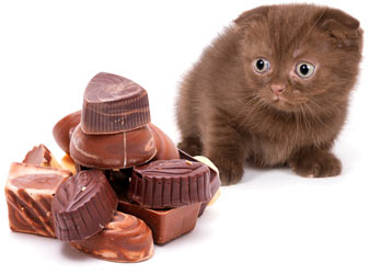 Cats and Chocolate: Why Is Chocolate Bad for Cats?