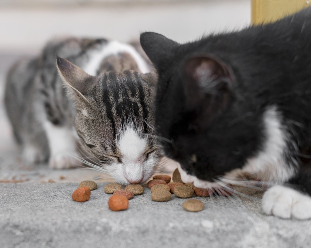 https://www.freepik.com/free-photo/cute-cats-eating-together-outdoors_10296102.htm#page=1&query=cat%20eating&position=24