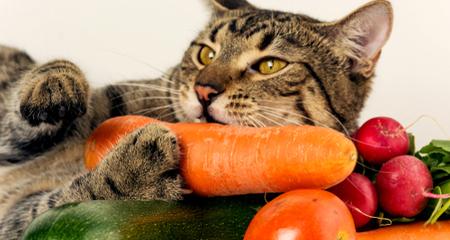 vegetables for cats online -