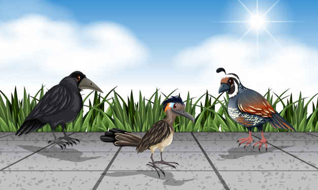 Different wild birds on the street Free Vector