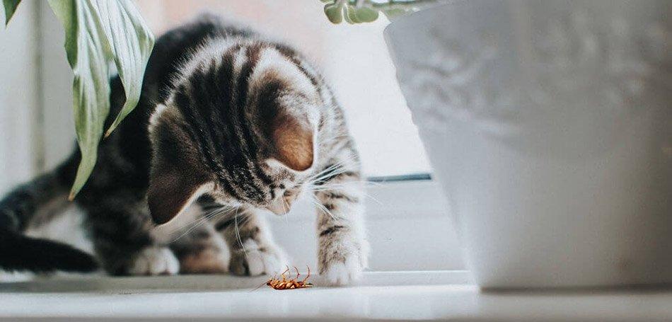 Do Cats Eat Roaches? – Kitty Advisor