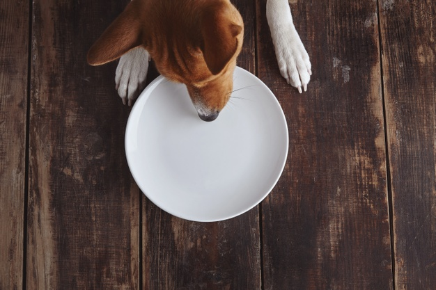 https://www.freepik.com/free-photo/dog-tries-eat-from-empty-ceramic-plate-old-vintage-brushed-wooden-table-with-white-top-view-concept_11357670.htm#page=1&query=dog%20eating&position=15