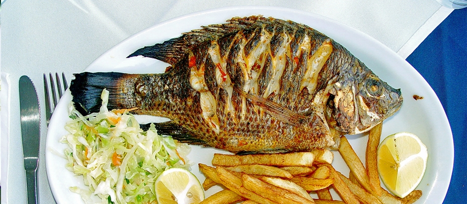 Can Dogs Eat Tilapia? - Dog Breeders Guide